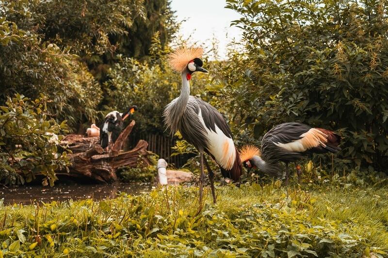 Vogel im Vogelpark Heiligenkirchen